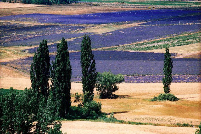 Landscapes_005