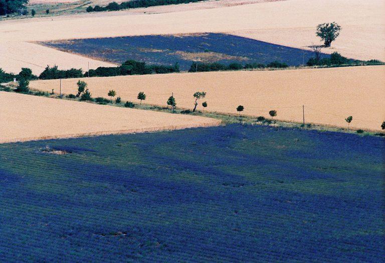 Landscapes_006