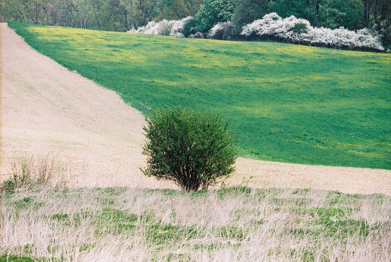 Landscapes_007