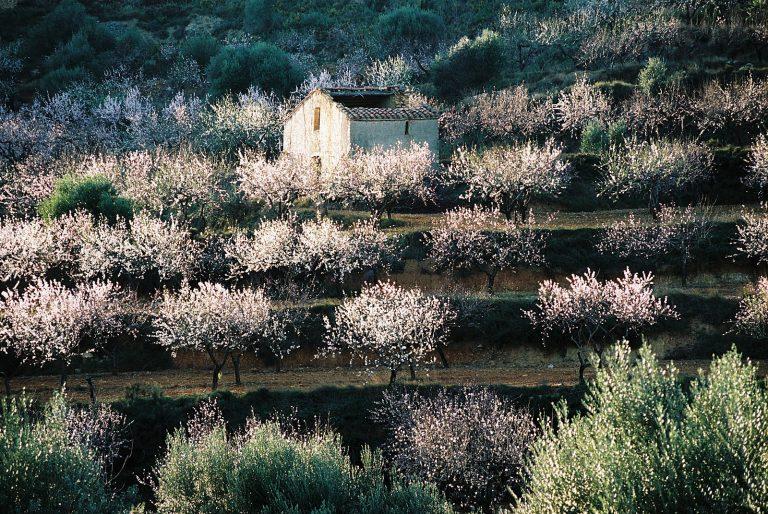 Landscapes_018